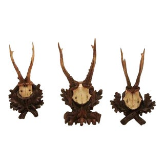 Collection of Nine Black Forest Antler Mounts on Hand-carved Wood Plaques For Sale