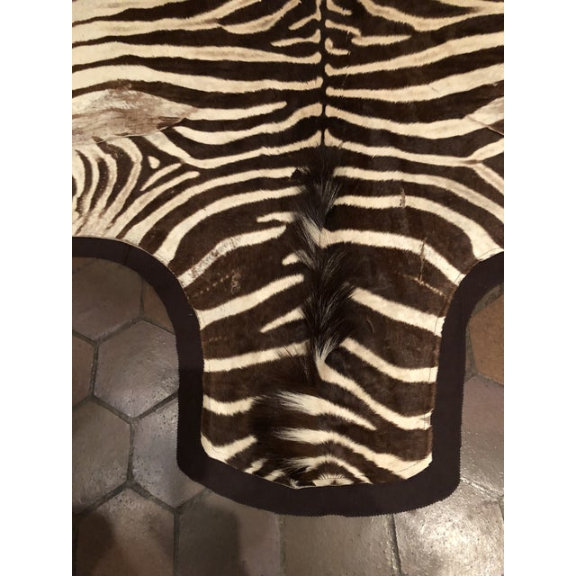 Striking vintage burchell zebra hide from Africa. Newly backed in chocolate brown felt.