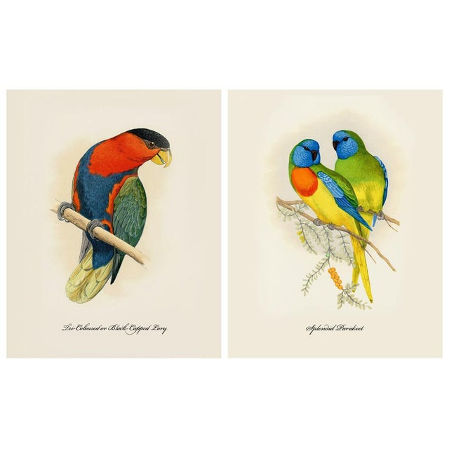 A gorgeous set of 12 reproduction parrot prints after original Alexander Francis Lydon (1836-1917) lithographs of parrots...