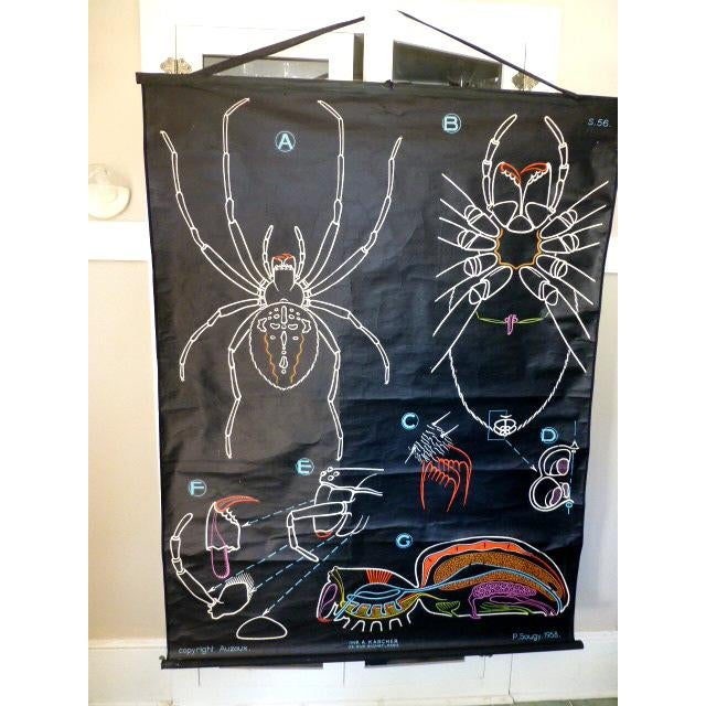 French Vintage Chalk Plate Garden Spider For Sale In Sacramento - Image 6 of 8