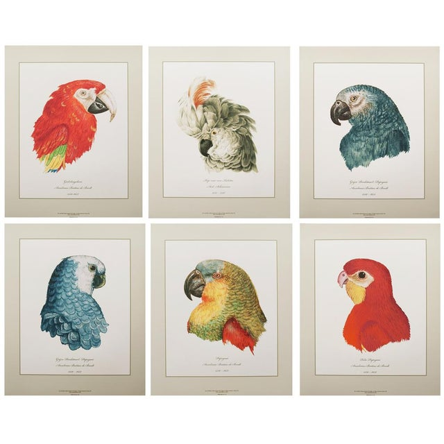 Anselmus De Boodt & Aert Shoumann, 16-18th C. Parrot Head Study Prints - Large Set of 6 For Sale - Image 10 of 10