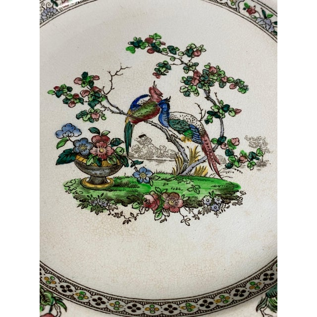 English Copeland Spode Bird and Border Plates - a Pair For Sale - Image 3 of 8