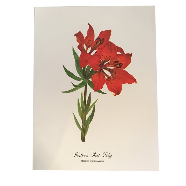 Western Red Lily Botanical Print - Image 1 of 4