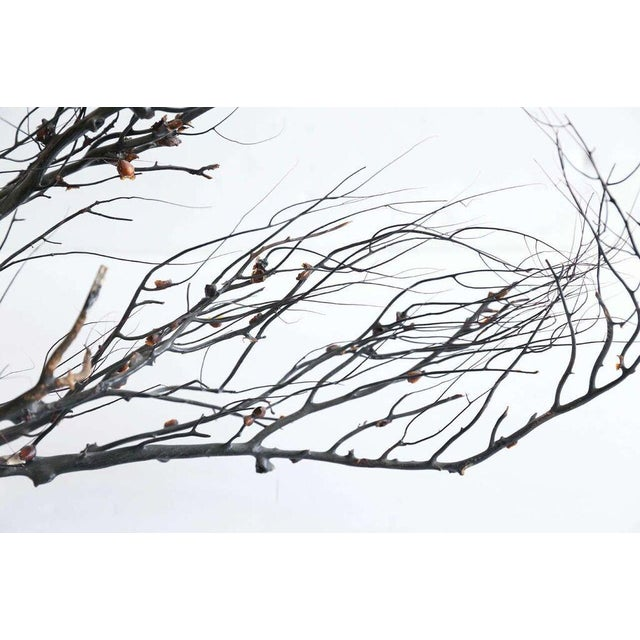 Contemporary Black Sea Whip Coral Sculpture For Sale - Image 3 of 8