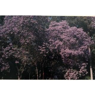 Spring Landscape Color Photograph Garo For Sale