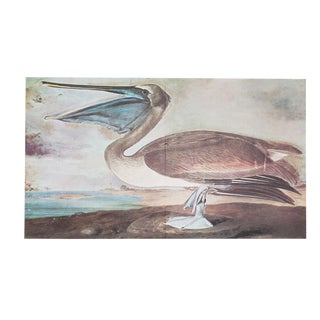 1960s Cottage Style Lithograph of a Brown Pelican by John James Audubon For Sale