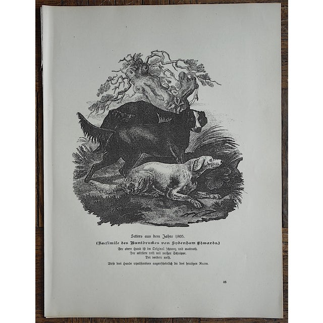 Antique Hunting Dog Engravings - Set of 3 For Sale - Image 4 of 5