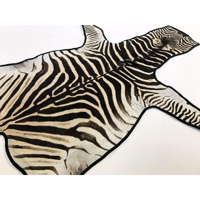 Modern Forsyth Authentic Zebra Hide Rug Trimmed in Black Velvet For Sale - Image 3 of 6