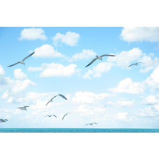 """Seagulls 1"" Landscape Photograph For Sale"