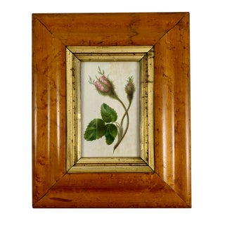 English Regency Period Original Watercolor in Fruitwood Frame - Pink Hairy Rose For Sale