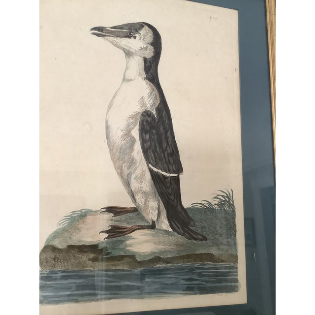 Realism 18th Century Antique Original Peter Mozell Engraving by T Pennant For Sale - Image 3 of 11