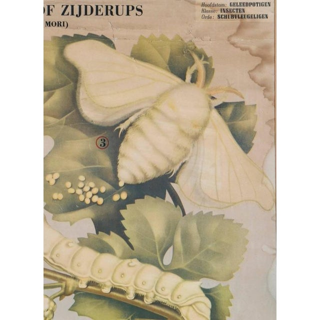 Framed Belgian Vintage Chart of White Moth - Image 2 of 5