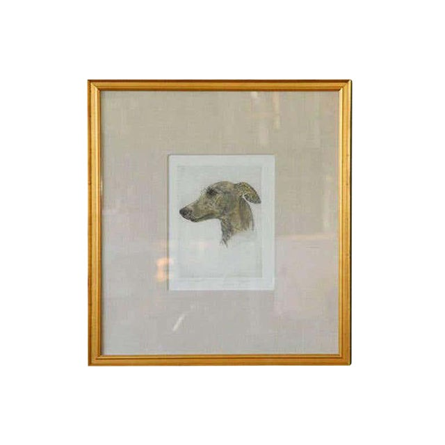 Colored Etching of Whippet Hunting Dog For Sale