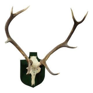 Large Black Forest Deer Trophy From Salem - Germany 1957 For Sale
