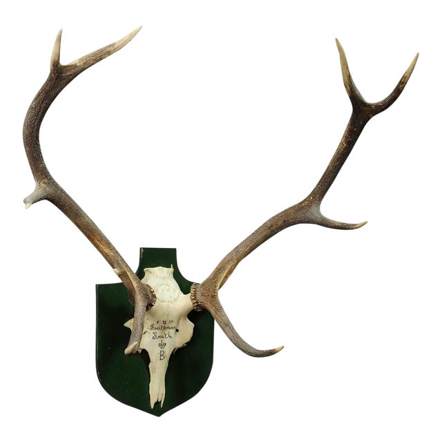 Large Black Forest Deer Trophy From Salem - Germany 1957 For Sale
