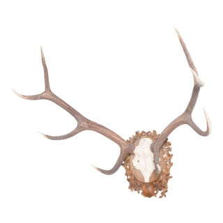 Vintage Deer Antlers Wall Mounted Trophy For Sale