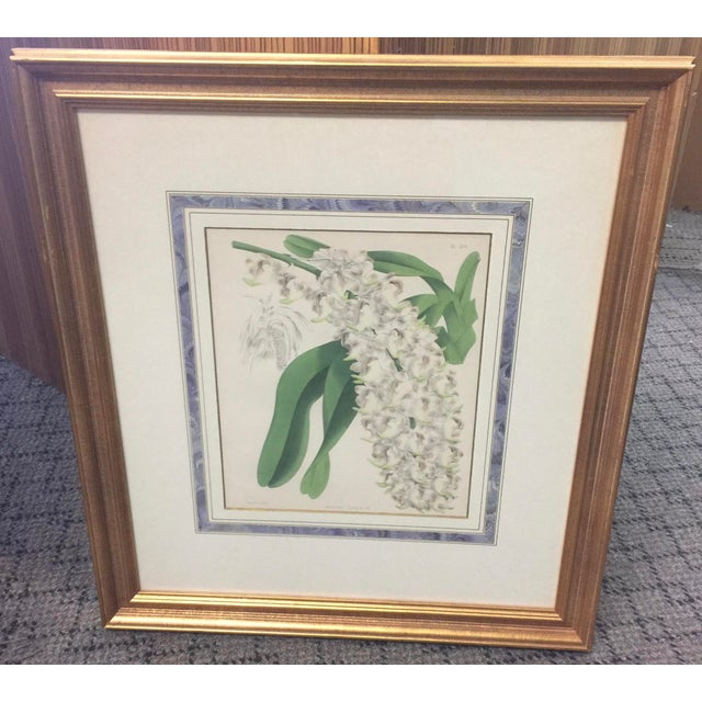 Glass Botanical Print of Christmas Orchids For Sale - Image 7 of 7