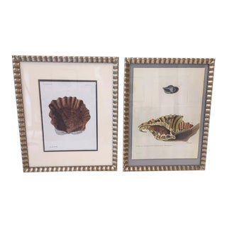 Framed Hand Colored Shell Prints - A Pair