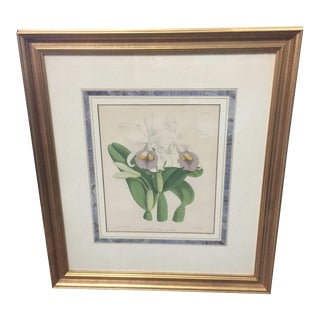 Botanical Print of Orchids For Sale