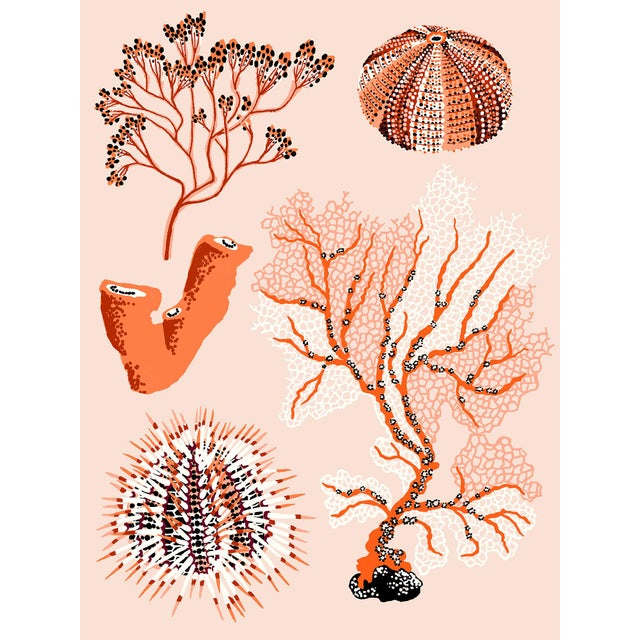 Coral Seaweed Giclee Print by Sarah Gordon For Sale
