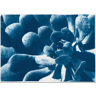 """2021 """"Botanical Fractal Leaves"""" Contemporary Abstract Cyanotype For Sale"""