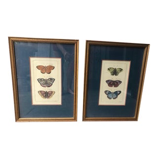 Gilt Wood Framed Butterfly Engravings - A Pair For Sale