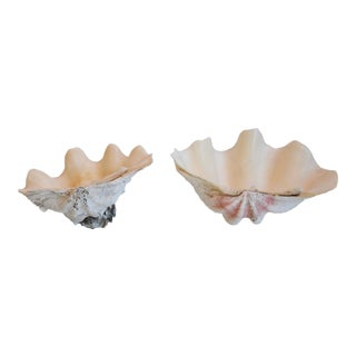 Nautical Clamshell Specimens, Set of Two For Sale