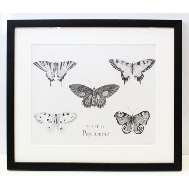 Black and White Butterflies Sketch For Sale - Image 10 of 10