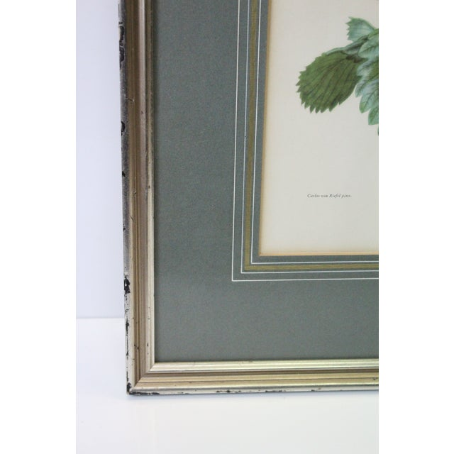 Silver Framed Strawberry Print For Sale - Image 4 of 7