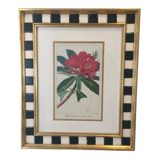 "Late 20th Century Vintage Framed ""Rhododendron Botanical"" Print by Pancrace Bessa For Sale"