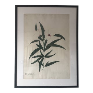 Early 19th Century Antique Hand-Colored Hibiscus Botanical Study Print For Sale