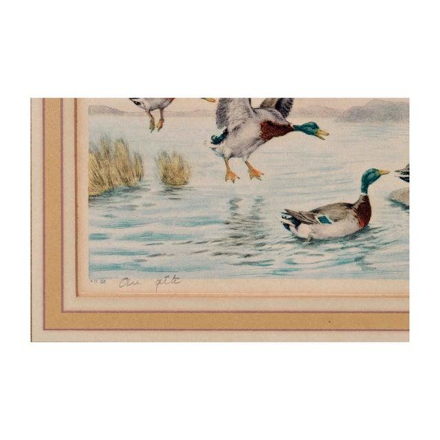 Mallard Ducks Painting For Sale - Image 4 of 4