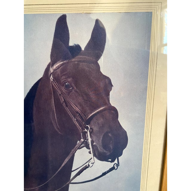 American Mid 20th Century Horse Portrait Photograph, Framed For Sale - Image 3 of 9