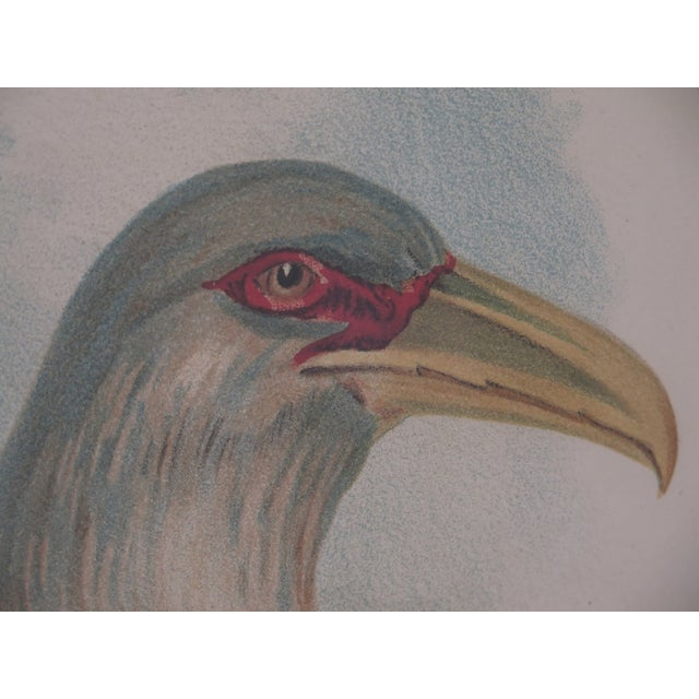Large Custom Framed Channel Bill Bird Print Offered For Sale Is This High Quality Framed Art Being Sold From Private Home....