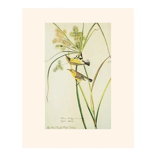 Prairie Warblers and Ladybug by Audubon, 1960s Contemporary Style Print For Sale