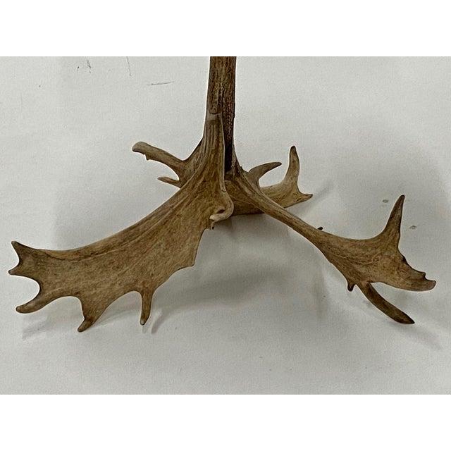 Organic Modern Antler Side Table For Sale - Image 10 of 13