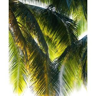 """Gaétan Caron """"Parasol"""" Puna Peninsula, Hawai'i Photograph, 2107 2017 For Sale"""