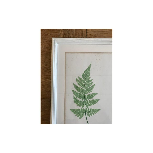 Arts & Crafts 19th Century Bradbury & Evans Nature Printed Fern Print For Sale - Image 3 of 6