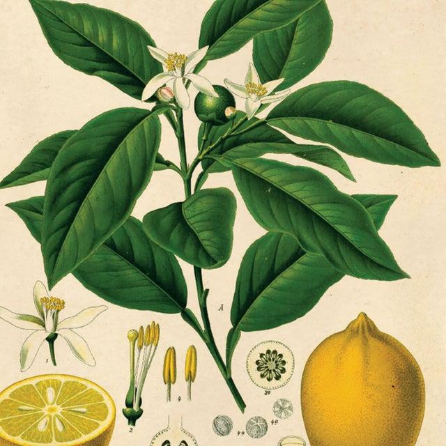 Botanical Lemon Citrus Fruit Print Poster - Image 3 of 3