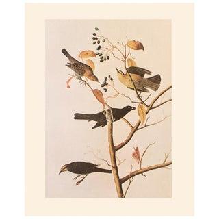 1966 Rusty Grakle and Rusty Blackbird by John James Audubon Vintage Cottage Print For Sale
