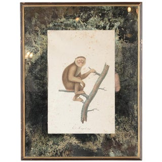 18th-C. Colored Monkey Print by Jean Baptiste For Sale