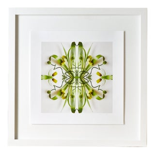 """""""No. 1"""" Contemporary Botanical Photograph by Erin Derby, Framed For Sale"""