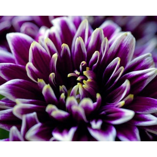 Contemporary Photograph, Botanical 46 For Sale