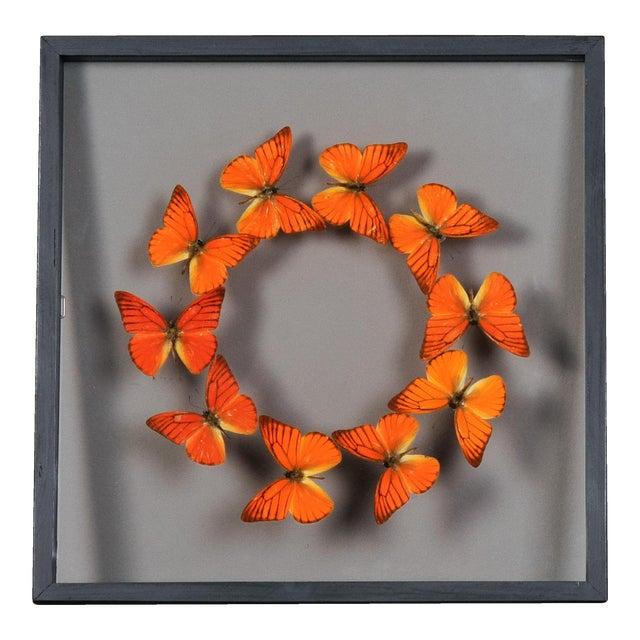 Sarreid LTD Butterflies Collection - Image 1 of 2