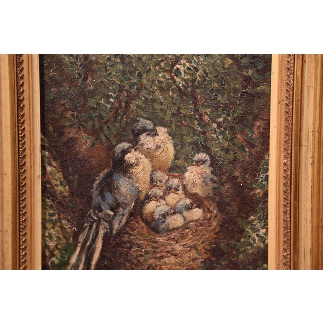 French Pair of 19th Century French Birds Oil Paintings in Gilt Frames Signed Delor For Sale - Image 3 of 9