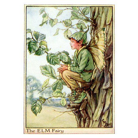 Vintage Flower Fairies of the Trees, Set of 3 Prints For Sale - Image 4 of 5