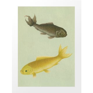Vintage German Bookplate Print - Fish