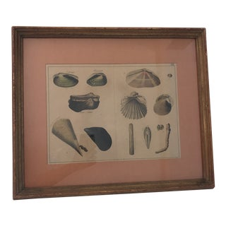 19th Century Antique Hand-Painted Shell Engraving For Sale