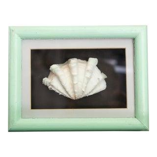 Vintage Coastal Nautical Seashell in Mint Green Shadowbox For Sale
