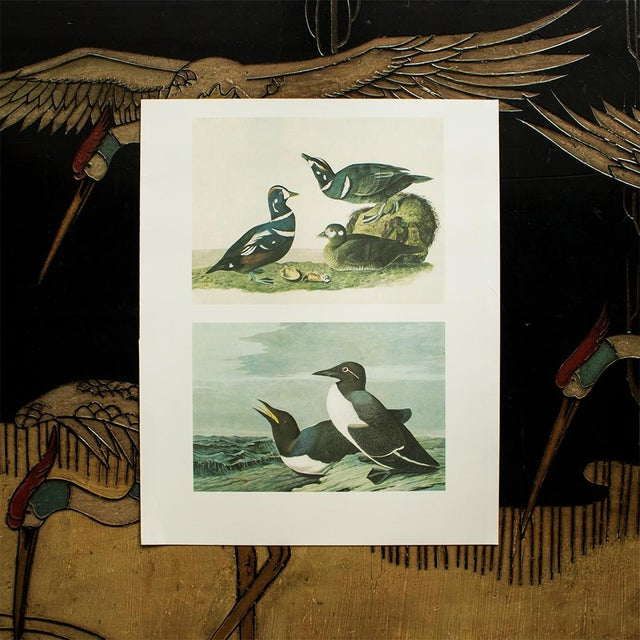 1960s 1966 Cottage Print of Harlequin Duck and Common Murre by Audubon For Sale - Image 5 of 6